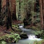 Лесной или сухой ручей?